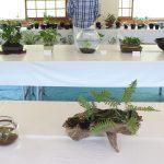 兵庫県メダカ愛好会の雪彦荘でのイベントに行ってきました!