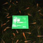 野生の水草を水槽に入れる前に「水草その前に」を使うべき4つの理由