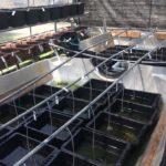 メダカの飼育場にエアレーション配管を設置!工具と方法の紹介